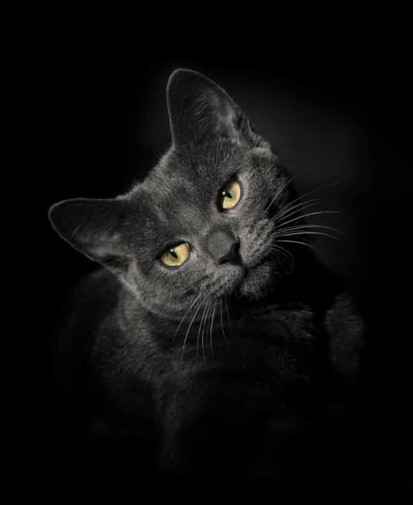 Картинки живых котов черный